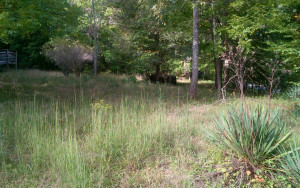 20 acres in Union County near Blairsville and Young Harris Georgia. Lots of potential.